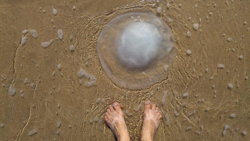 https: img.okezone.com content 2018 07 02 406 1916644 63-wisatawan-disengat-ubur-ubur-di-pantai-selatan-b8DO9vb9Zr.jpg