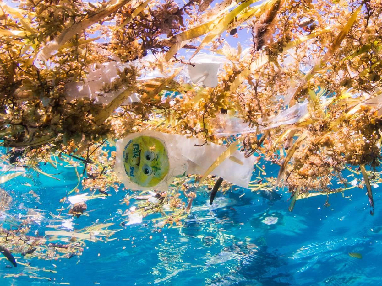 https: img.okezone.com content 2018 07 03 406 1917032 hati-hati-membuang-pembalut-lewat-toilet-bisa-merusak-keindahan-laut-VvaDfDjbGS.jpg