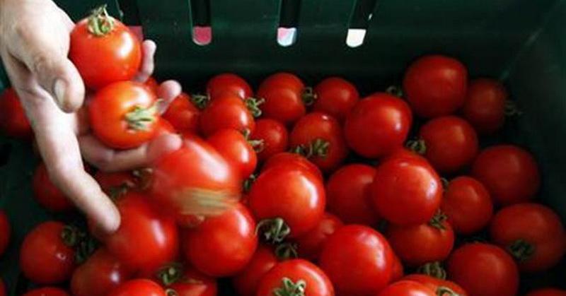 https: img.okezone.com content 2018 07 10 56 1920199 manfaatkan-tomat-mahasiswa-ini-bikin-baterai-ramah-lingkungan-iAo5JJhNaN.jpg