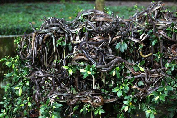 https: img.okezone.com content 2018 07 12 406 1921483 selamatkan-nyawa-dari-hewan-buas-ini-cara-hadapi-ular-hingga-hiu-UWX96gmjLj.jpg