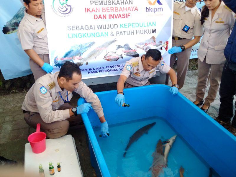 Unduh 440 Koleksi Gambar Ikan Aligator HD Terbaru