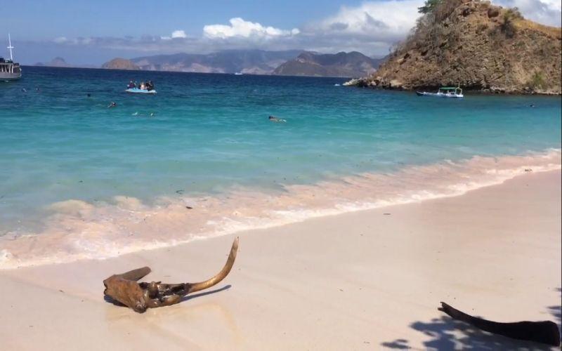 https: img.okezone.com content 2018 08 12 406 1935285 pink-beach-keajaiban-lain-pulau-komodo-hanya-ada-7-di-dunia-w2baAe4RYB.jpg