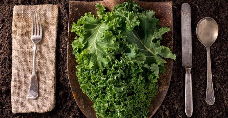 https: img.okezone.com content 2018 08 28 481 1942457 kale-sayuran-super-yang-efektif-mengontrol-gula-darah-g6DnXokY7f.jpg