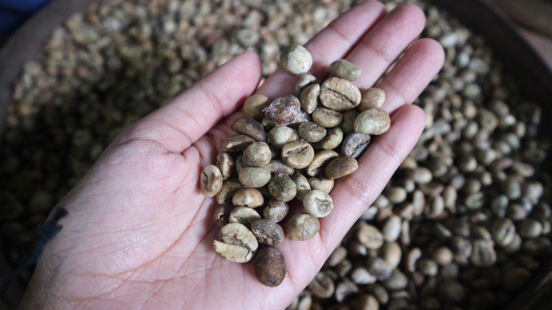 https: img.okezone.com content 2018 09 07 406 1947191 menilik-proses-pembuatan-kopi-luwak-di-tampaksiring-bali-nTTHa5uXLV.jpg