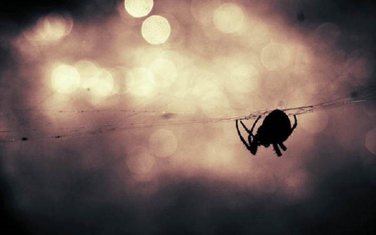 https: img.okezone.com content 2018 09 13 196 1950136 seekor-laba-laba-ditemukan-bersarang-di-dalam-telinga-pria-ini-94sXhicPV2.jpg