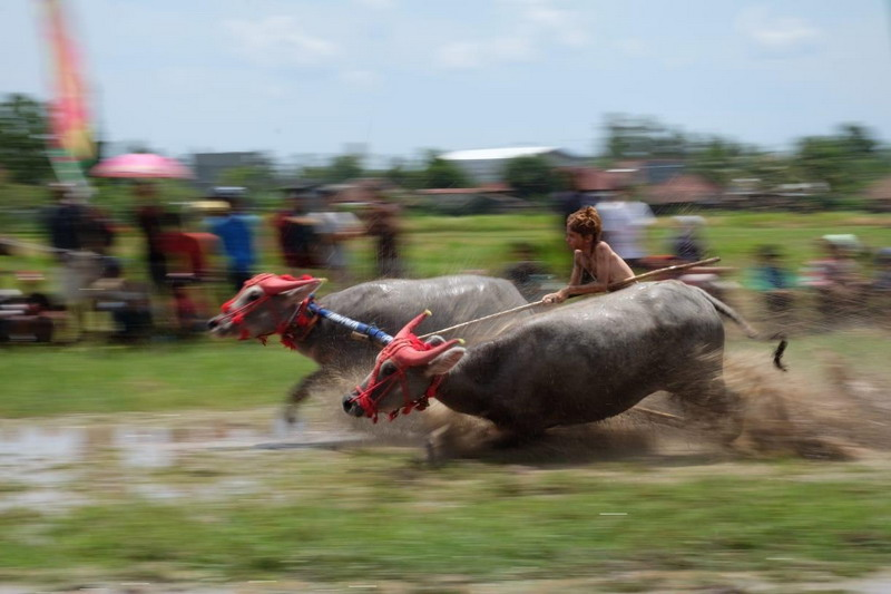 https: img.okezone.com content 2018 09 16 406 1951095 serunya-pecah-barapan-kebo-buka-festival-pesona-moyo-2018-Lh4qnWp20J.jpg