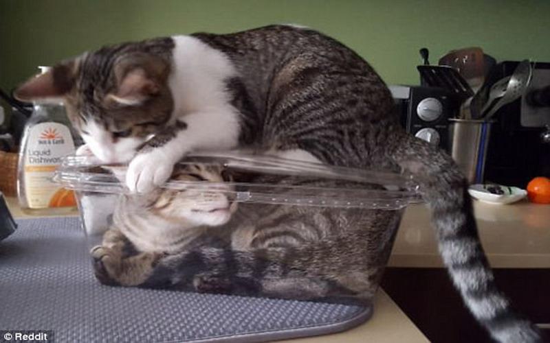 Menggemaskan Tapi Jangan Lagi Tidur Bareng Kucing 5 Bahaya Ini Mengintai Okezone Lifestyle