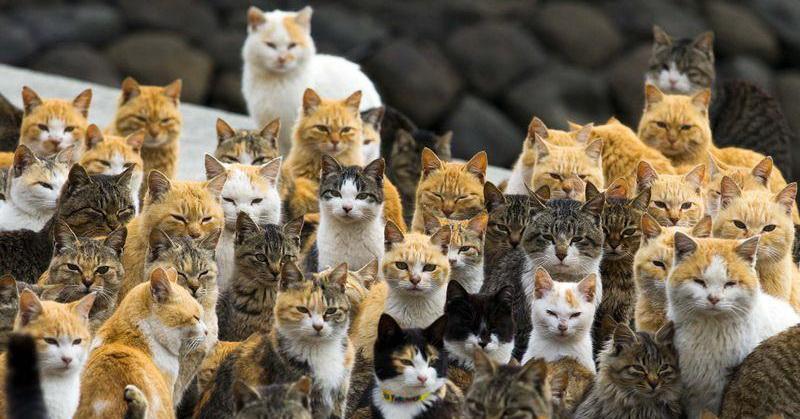 https: img.okezone.com content 2018 10 01 56 1957929 penelitian-temukan-kucing-tak-pandai-berburu-tikus-40eK6uDsAD.jpg