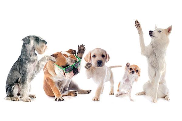 https: img.okezone.com content 2018 10 03 196 1958918 video-anjing-isap-puting-majikannya-netizen-malah-gagal-fokus-9SJnKAuzTF.jpg