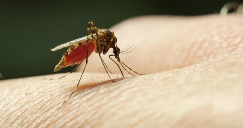 https: img.okezone.com content 2018 10 06 481 1960547 sebelum-bertugas-ke-daerah-gempa-bumi-palu-dianjurkan-minum-obat-anti-malaria-6tGjt58YvU.jpg