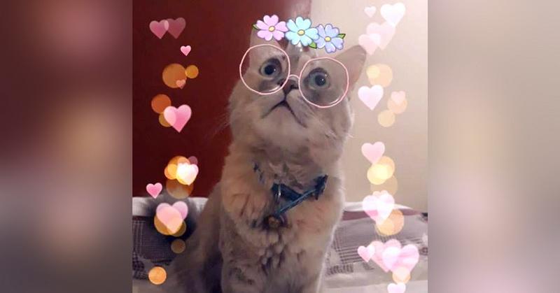 https: img.okezone.com content 2018 10 14 207 1963806 snapchat-luncurkan-filter-baru-untuk-pecinta-kucing-WSkqw9nt43.jpg