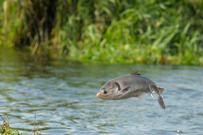 https: img.okezone.com content 2018 10 18 481 1965766 ikan-di-perairan-ini-horny-masal-ini-penyebabnya-vxwGBMkGdC.jpg