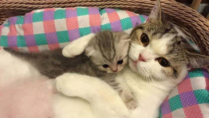 Unduh 80+  Gambar Kucing Imut Paling Lucu Gratis
