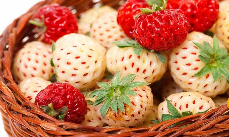 https: img.okezone.com content 2018 11 01 298 1971839 mengenal-pineberry-stroberi-warna-putih-yang-punya-banyak-manfaat-Ng7Sfe0M6i.jpg