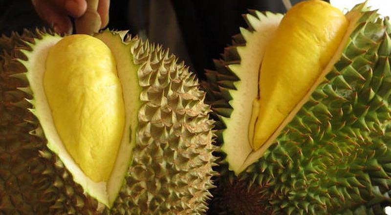 https: img.okezone.com content 2018 11 06 298 1974101 penis-banteng-sampai-durian-ada-di-museum-makanan-menjijikkan-xEuJFImkIz.jpg