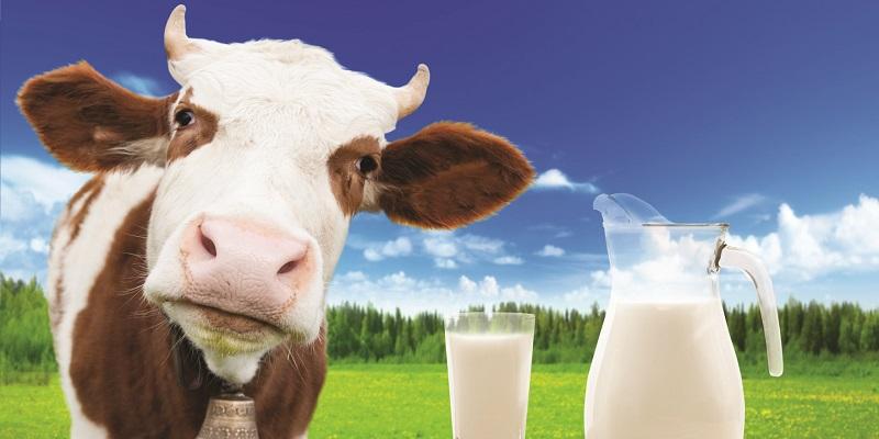 https: img.okezone.com content 2018 11 07 481 1974585 kunci-rahasia-sapi-perah-hasilkan-susu-segar-dan-bergizi-YwJu8hBxYa.jpg