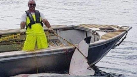 https: img.okezone.com content 2018 11 20 18 1980119 hiu-putih-4-6-meter-ditemukan-mati-di-pantai-sydney-australia-gvTsaa1FdE.jpg