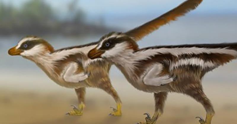 https: img.okezone.com content 2018 11 25 56 1982561 ditemukan-jejak-kaki-dinosaurus-berukuran-1-cm-f8l6nw8o3a.jpg