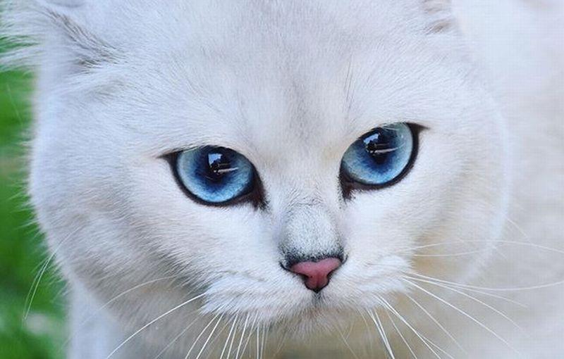 Unduh 94+  Gambar Kucing Yang Mudah Ditiru Terbaik HD