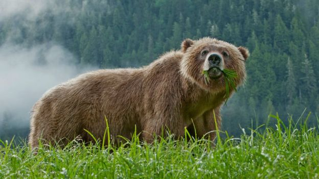 https: img.okezone.com content 2018 11 30 18 1984828 ibu-dan-bayi-perempuannya-tewas-diserang-beruang-RW6c5eviz9.jpg