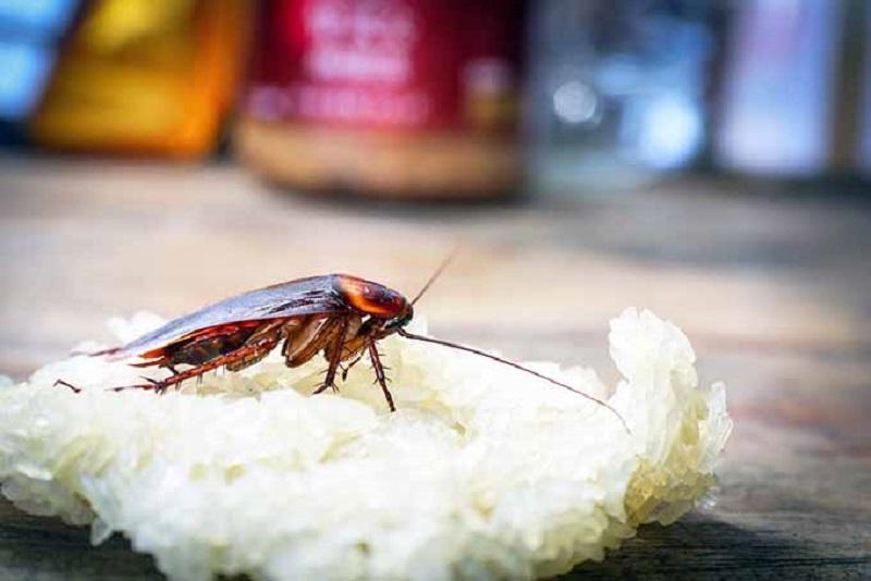 https: img.okezone.com content 2018 12 12 481 1990257 meski-menjijikkan-kecoa-ternyata-banyak-manfaatnya-untuk-kesehatan-GMH5Cgq4zl.jpg