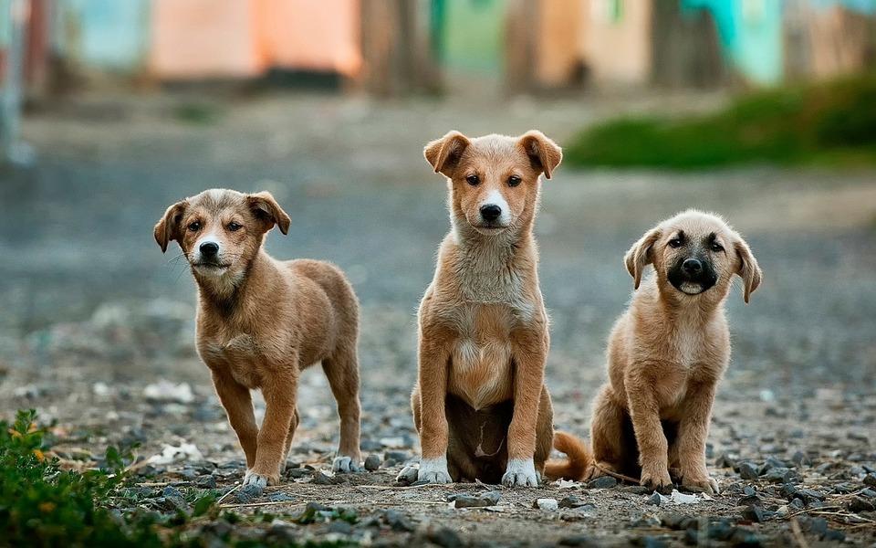 https: img.okezone.com content 2018 12 16 298 1992099 heboh-lagu-makan-anjing-pakai-kol-ini-hukumnya-makan-daging-anjing-menurut-islam-NRTCOUNw9F.jpg