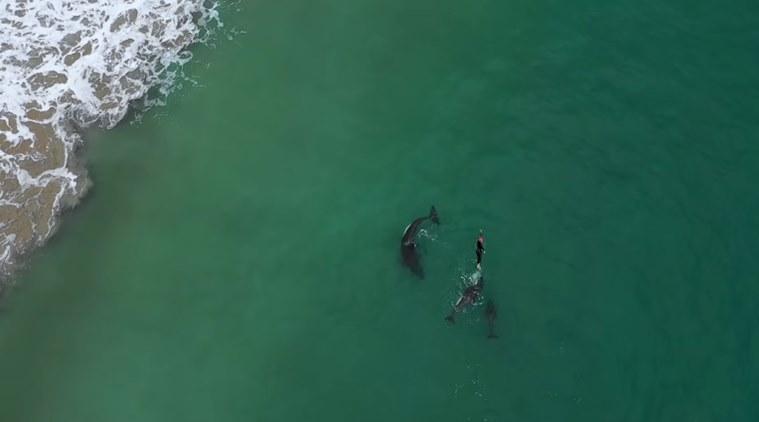https: img.okezone.com content 2018 12 17 406 1992366 viral-video-wanita-asik-berenang-dengan-orca-si-paus-pembunuh-liar-DtH7FUJL1v.jpg