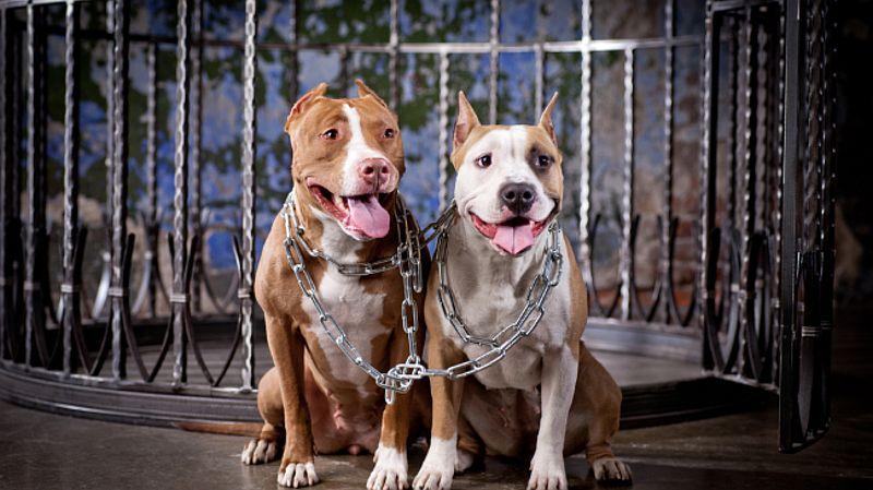 Bahkan, kadar oksitosin anjing rata-rata lima kali lebih tinggi daripada kucing.