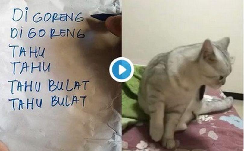 https: img.okezone.com content 2019 01 02 196 1998899 viral-kucing-jual-tahu-bulat-vs-kucing-insaf-mana-paling-menggemaskan-WqPPuOG4wI.jpg