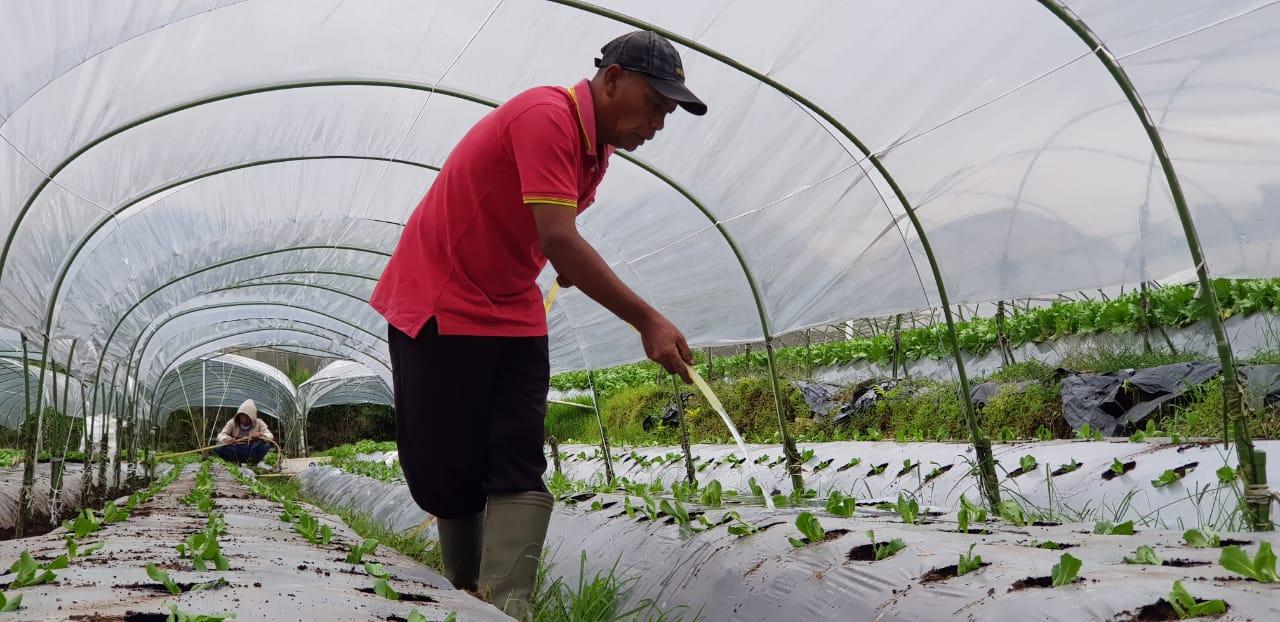 https: img.okezone.com content 2019 01 08 320 2001753 digitalisasi-pertanian-mampu-tingkatkan-produksi-hingga-tekan-biaya-pemasaran-kYPvdiR3qj.jpeg