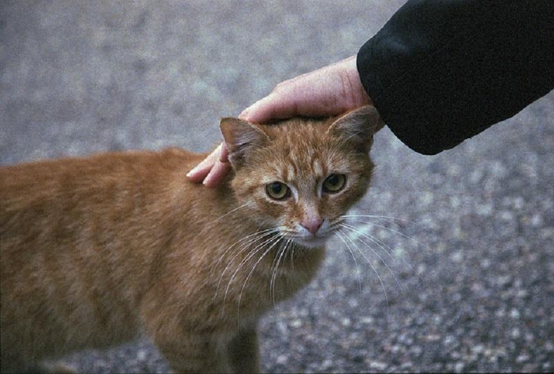 https: img.okezone.com content 2019 01 08 338 2001388 pemprov-dki-tunda-razia-kucing-dan-anjing-liar-di-jalanan-ibu-kota-FmKuATdde1.jpg