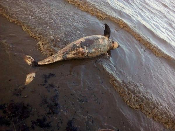 https: img.okezone.com content 2019 01 13 340 2003686 dua-duyung-ditemukan-mati-di-perairan-dumai-yang-tercemar-limbah-9bTKfIy3mZ.jpg