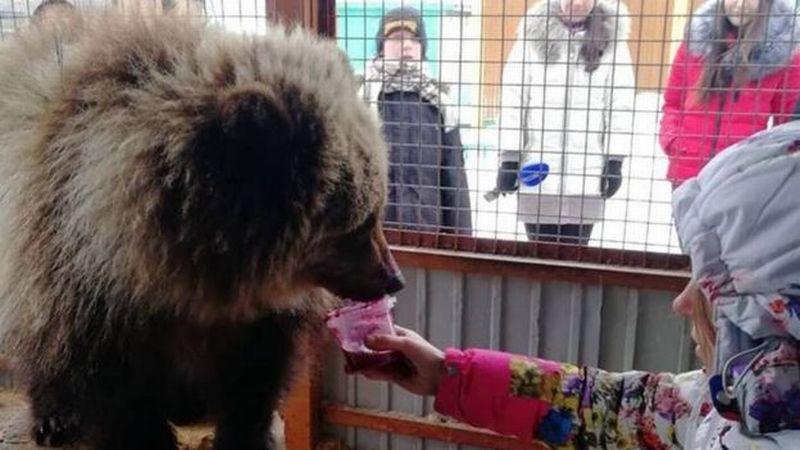 https: img.okezone.com content 2019 01 17 18 2005584 kisah-mashka-si-beruang-kesepian-yang-ditolak-di-kampungnya-A3P4vPpgKN.jpg