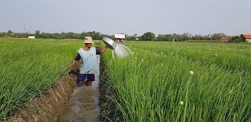 https: img.okezone.com content 2019 01 17 320 2005919 kontribusi-kementan-tingkatkan-kesejahteraan-petani-hingga-kurangi-kemiskinan-YCkyA1ndLJ.jpg