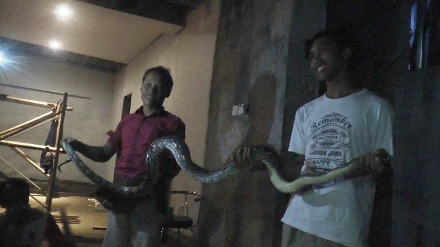 https: img.okezone.com content 2019 01 17 512 2005593 ular-piton-raksasa-masuk-ke-permukiman-warga-N1QzUWIct1.jpg