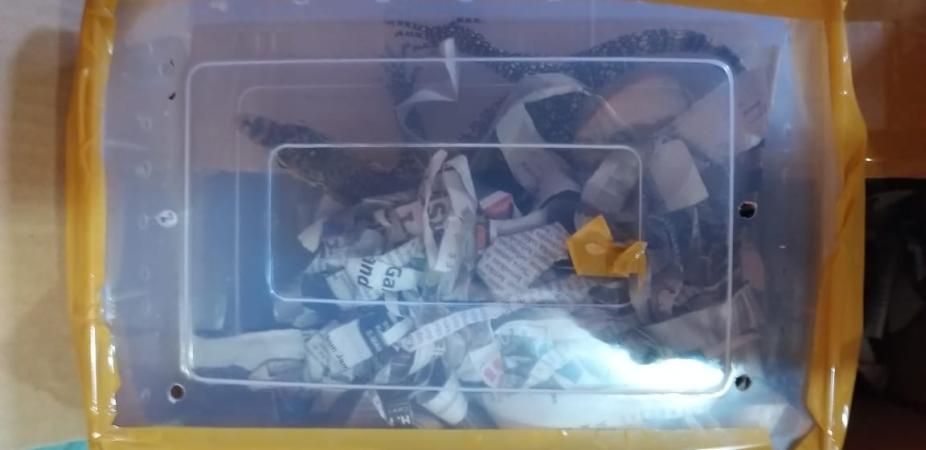 https: img.okezone.com content 2019 01 19 340 2006731 petugas-bandara-jambi-temukan-paket-mencurigakan-ternyata-isinya-4-ekor-buaya-DDEhiNuN71.jpg
