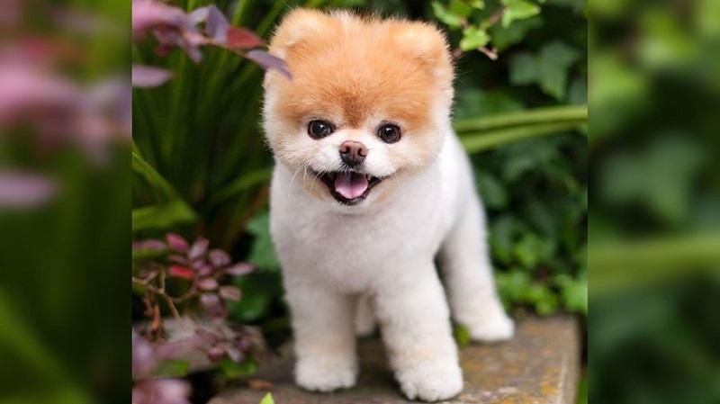 https: img.okezone.com content 2019 01 21 196 2007513 anjing-terlucu-di-dunia-meninggal-netizen-berduka-5r1JEE9ice.jpg