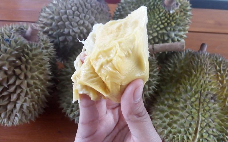 https: img.okezone.com content 2019 01 24 298 2008928 sensasi-makan-durian-bawor-rp1-2-juta-di-kediri-enaknya-tingkat-dewa-oX6SHKiURv.jfif