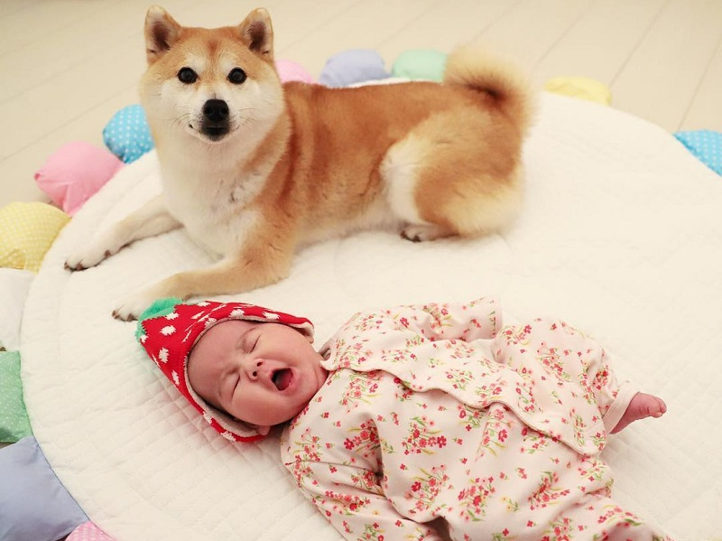 https: img.okezone.com content 2019 01 25 196 2009361 anjing-ini-bisa-diamkan-bayi-yang-menangis-seperti-baby-sitter-pintar-banget-V9MaJxawoI.jpg