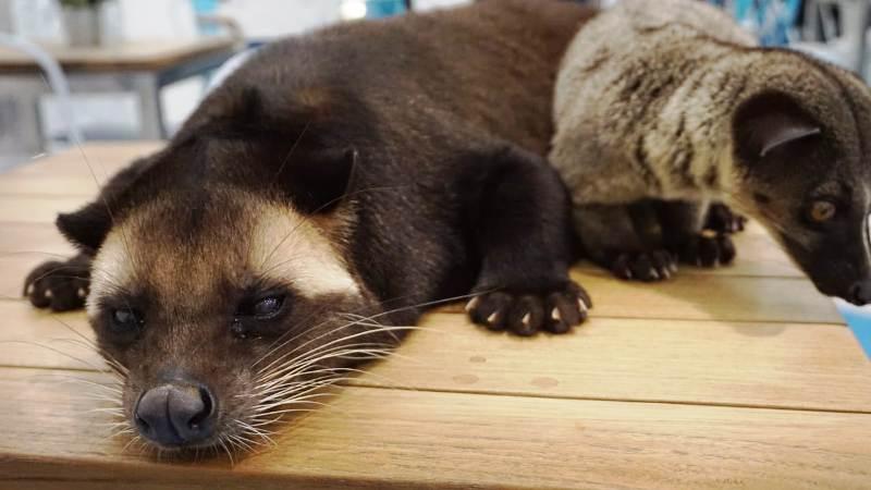 Kucing Dan Anjing Sudah Biasa Kekinian Saatnya Pelihara Musang Okezone Lifestyle
