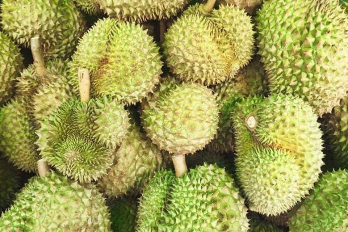 Hasil gambar untuk durian vulkanik