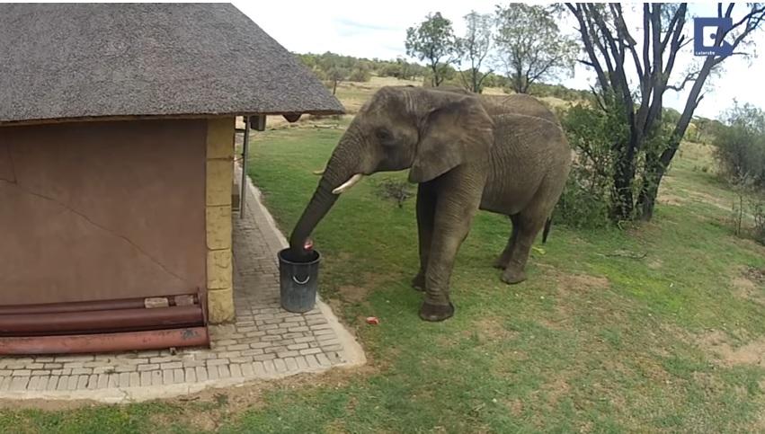 https: img.okezone.com content 2019 01 29 196 2010786 gaes-gajah-saja-buang-sampah-di-tempatnya-kalau-kamu-MxAkFOwVgg.jpg
