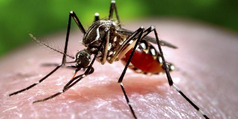 https: img.okezone.com content 2019 01 29 481 2010915 usir-nyamuk-di-rumah-tanpa-biaya-bagaimana-caranya-rflGBNr6F9.jpg