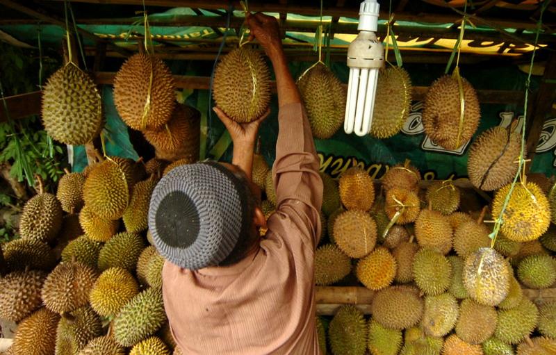 https: img.okezone.com content 2019 01 30 481 2011198 3-orang-ini-meregang-nyawa-usai-santap-durian-enak-NYVhDwksaf.jpg