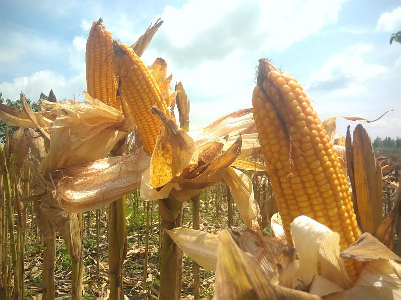 https: img.okezone.com content 2019 02 07 320 2014708 produksi-pangan-meningkat-ktna-ini-prestasi-petani-kita-UMF8QXDDGX.jpg