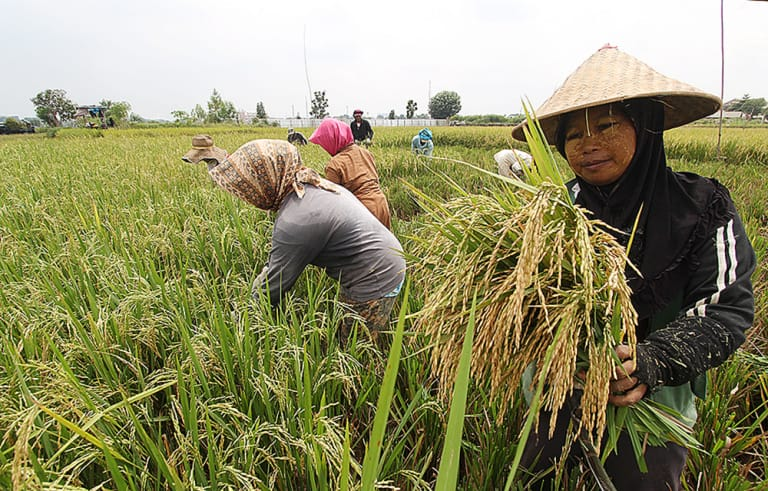 https: img.okezone.com content 2019 02 09 320 2015677 neraca-perdagangan-hasil-pertanian-surplus-usd10-miliar-pada-2018-7EWWC8Kc3D.jpg