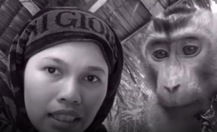 https: img.okezone.com content 2019 02 11 194 2016587 aksi-kocak-wanita-asal-pekanbaru-perawatan-kecantikan-dokternya-monyet-FWplf2tzki.jpg