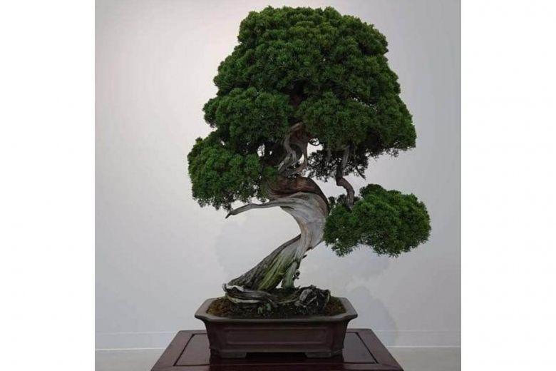 https: img.okezone.com content 2019 02 12 18 2016816 bonsai-berusia-400-tahun-dicuri-pemilik-kirim-pesan-untuk-malingnya-yhTfwSpyQn.jpg