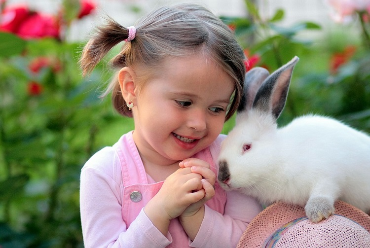 https: img.okezone.com content 2019 02 12 196 2017008 penyebab-kelinci-cepat-mati-padahal-baru-dipelihara-62WmCj3Qqg.jpg