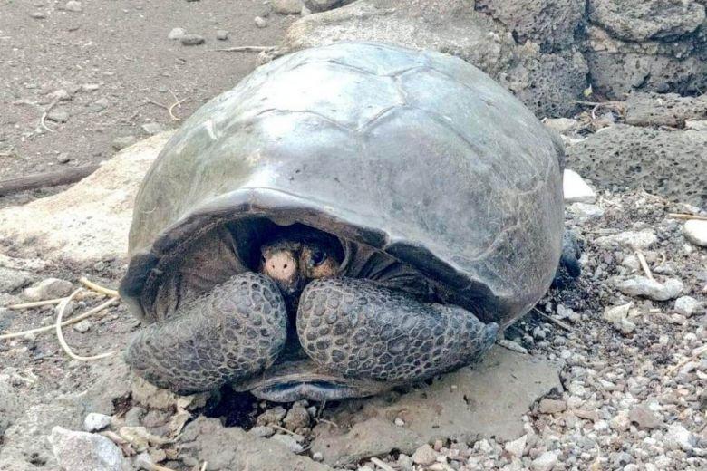 https: img.okezone.com content 2019 02 20 18 2020593 diduga-sudah-punah-seabad-lalu-spesies-kura-kura-raksasa-ditemukan-di-galapagos-BSt8d6nHxG.jpg